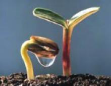 Питание для исцеления и духовного роста