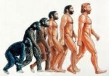 Человек: «тупая обезьяна» или «Высшее создание»?