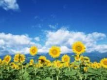 Прогноз и рекомендации с 16 по 22 июля 2012 года