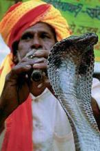 В чем заключается культ змеи в Индии?