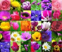 Цвета и Ароматы