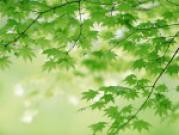 Энергетическая сила деревьев