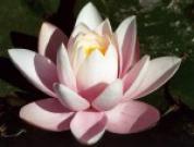 Бодхидхарма. Ум Будды