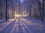 Прогноз на декабрь 2011 г
