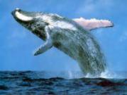 Призыв к акции по спасению китов