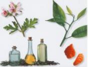 Эфирные масла в уходе за стареющей кожей лица