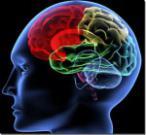 Девять игр, в которые играет наш мозг