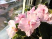 Благотворное влияние комнатных растений
