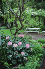 Растения на садовом участке