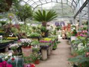 Фен шуй растения (цветы). Энергетика домашних растений